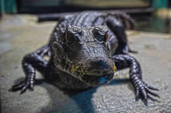 В лесу в Оренбургской области нашли мертвого крокодила