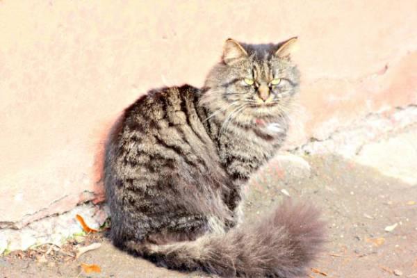 Под Хабаровском возбуждено дело против мужчины, выбросившего кота из окна