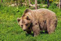 На Камчатке рядом с убитым медведем нашли тело мужчины