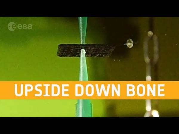Астронавты смогут исцелять себя с помощью напечатанной кожи и выращенных из собственных клеток костей