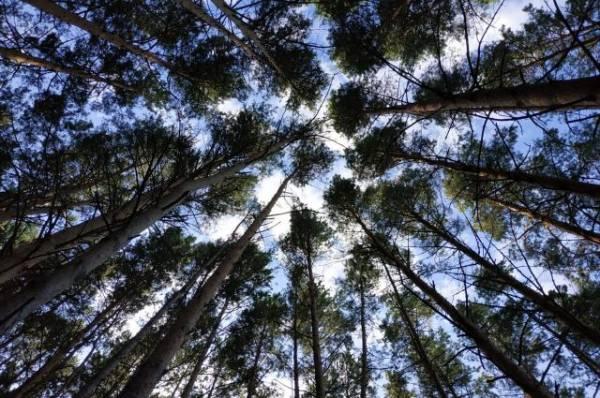 В Нижегородской области в лесу ищут пропавшую пятилетнюю девочку
