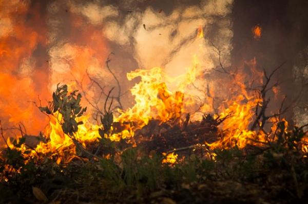 В лесах Бразилии отмечено рекордное количество пожаров