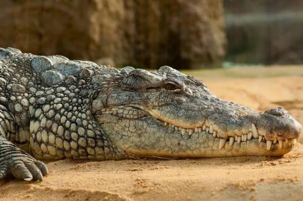 В Стокгольме посетителя парка укусил крокодил Фиделя Кастро