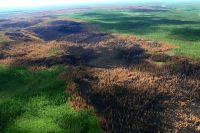 Власти Бразилии могут привлечь армию для тушения пожаров в Амазонии