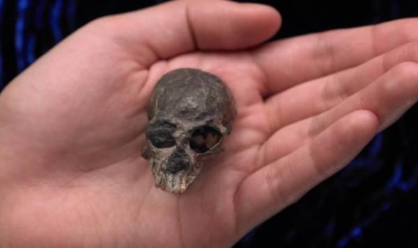 Этот крохотный череп возрастом 20 млн лет проливает свет на эволюцию человеческого мозга