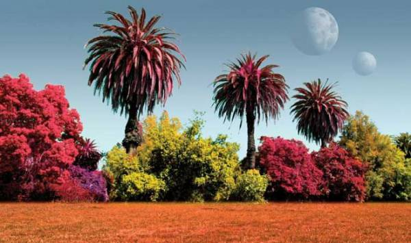 Новый прибор TreePol может отыскать растительную жизнь... на других планетах