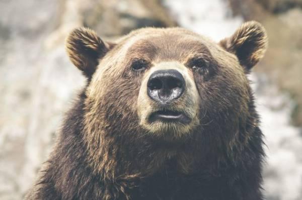 В Армении медведь загрыз туриста из Польши
