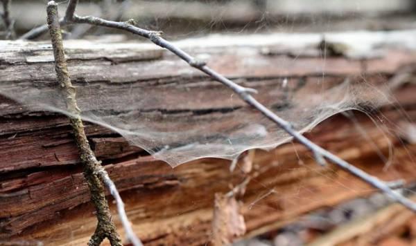 В Финляндии разработали прочный экопластик из паутины и древесных волокон