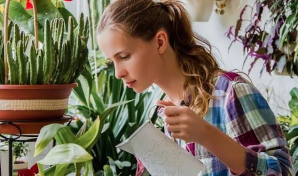 Домашние растения абсолютно бесполезны для очистки воздуха