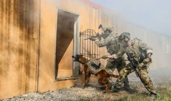 Армия США разработала особую защиту для служебных собак
