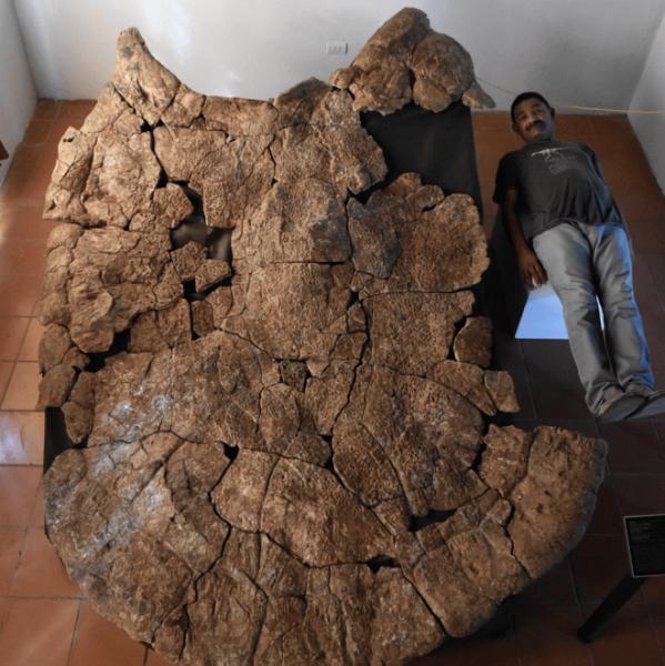 Самый большой панцирь в мире не спас доисторических черепах от настоящих охотников того времени
