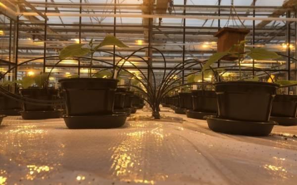 Моча может стать основным удобрением для выращивания растений на Марсе