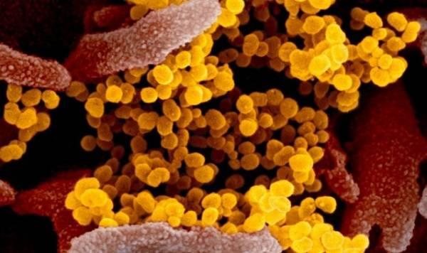 Тревожные новости: коронавирус может передаваться бессимптомно