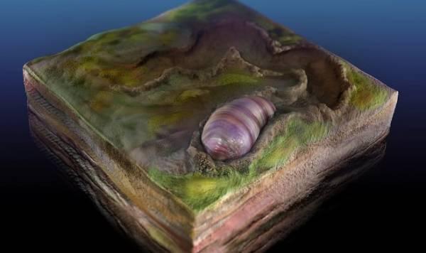 В Австралии найдены окаменелые останки древнейшего предка всех животных на Земле
