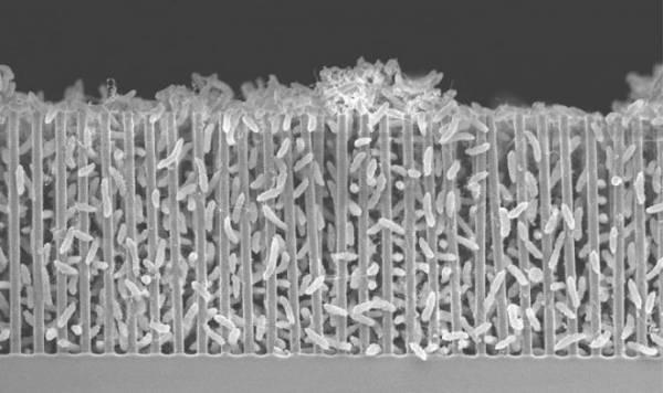 Новый биореактор даст марсианским колонистам кислород и ценное химическое сырье
