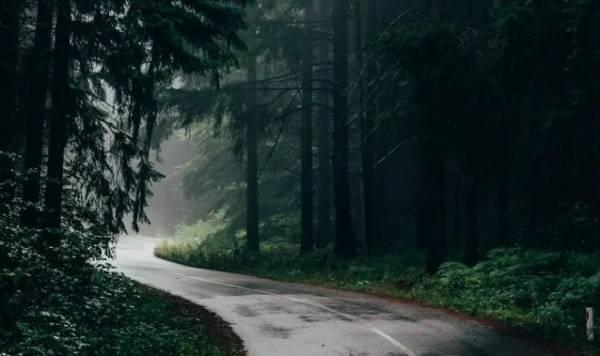 Ученые разгадали тайну притягательности аромата петрикора