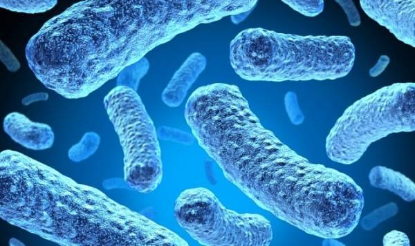 Биогибридная батарея соберет энергию электрических бактерий