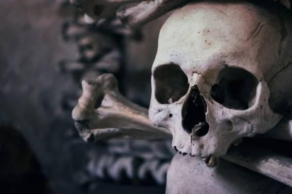 В Подмосковье грибники нашли в поле человеческий череп
