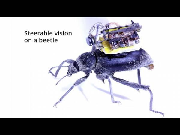 Крошечная «камера в рюкзачке» позволит взглянуть на мир глазами жуков