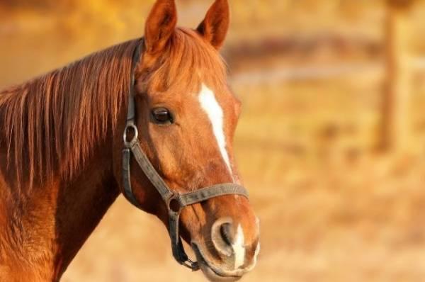 В Подмосковье пенсионер погиб, упав с лошади во время съёмок видео