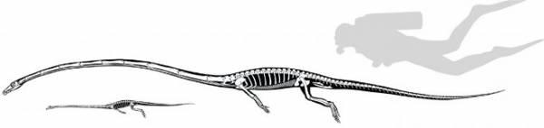 Палеонтологи разгадали загадку древних длинношеих танистрофеев