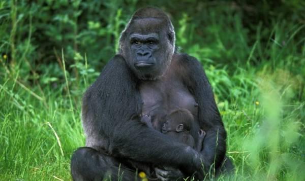 Всемирный фонд дикой природы бьет тревогу: количество животных в мире за 50 лет сократилось на 68%