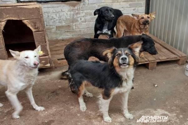 В Приморье стая бродячих собак напала на восьмилетнюю девочку