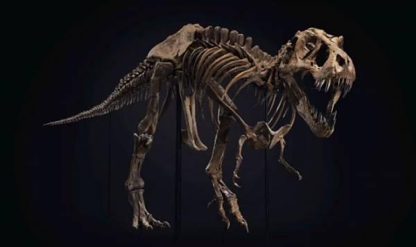 Самый знаменитый тираннозавр в мире отправляется на аукцион
