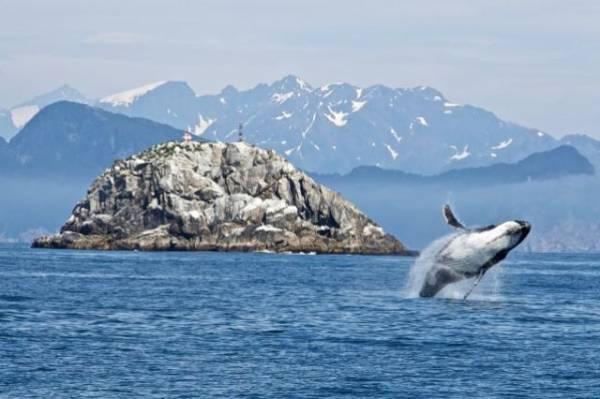 В Австралии выбросились на берег более двухсот китов