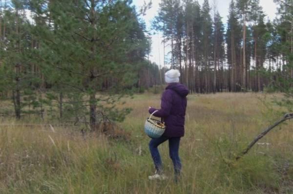 В Приморье полицейский спас потерявшуюся в лесу пенсионерку