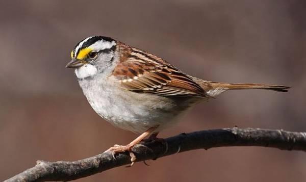 Во время эпидемии городские птицы научились петь по-новому