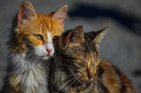Жителя Свердловской области осудили за жестокое убийство котов своей матери