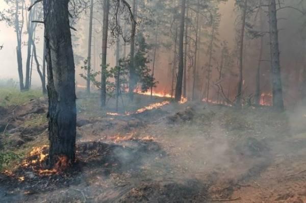 Под Воронежем из-за природных пожаров сгорели более 20 жилых домов