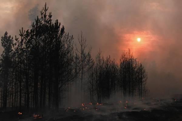 После крупного пожара в Воронежской области возбуждено уголовное дело