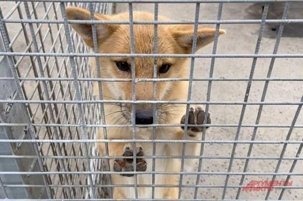 Смогут ли собаки унюхать коронавирус?