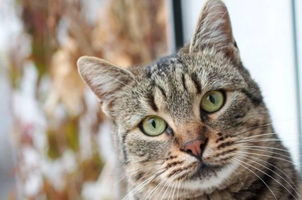 В Вологодской области пенсионерку осудили за убийство кота
