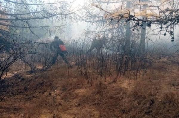 Лесопожарные службы потушили за сутки пять природных пожаров в России