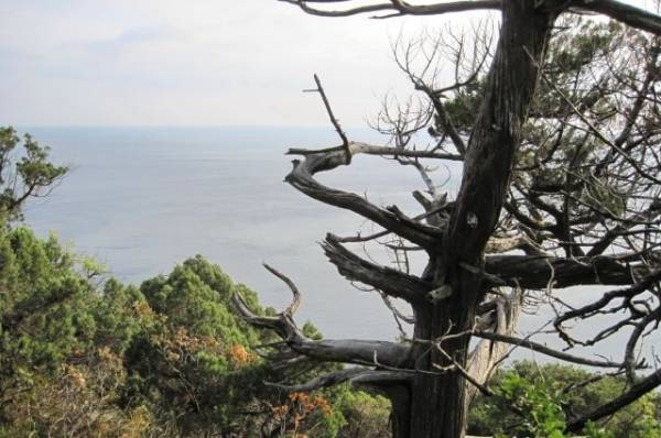 У границ приморского нацпарка «Земля леопарда» потушили крупный пожар