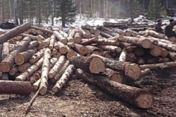 «Черные лесорубы» нелегально добыли в Иркутской области 900 кубов древесины