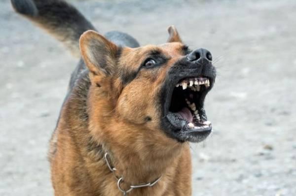 В Красноярске стая бродячих собак напала на девочку