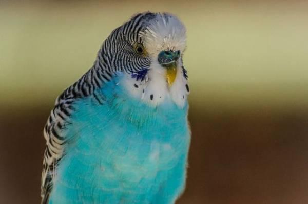 В Приморье злоумышленник с ножом похитил попугаев из зоомагазина