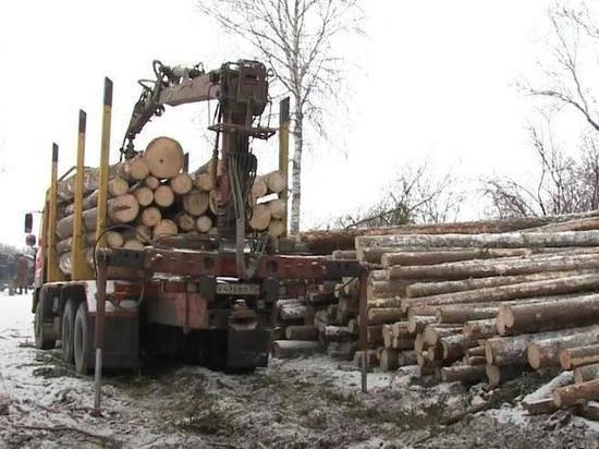 В России планируют создать федеральную службу лесных инспекторов