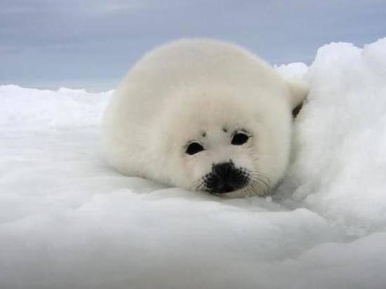 Вашингтон и Оттава запускают расширенный диалог по Арктике