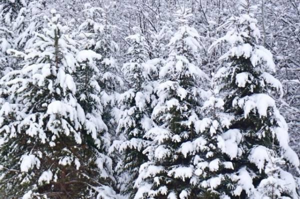 Детей, оставленных матерью в мороз в лесу, передадут под опеку дяде