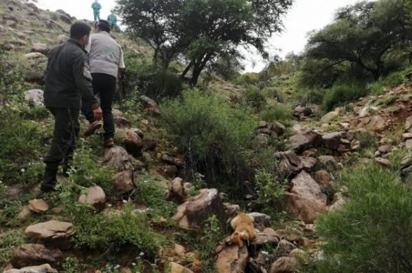 В Боливии при падении автобуса в ущелье погибли больше 20 человек