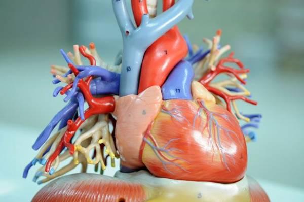 Какие органы можно заменить на искусственные?