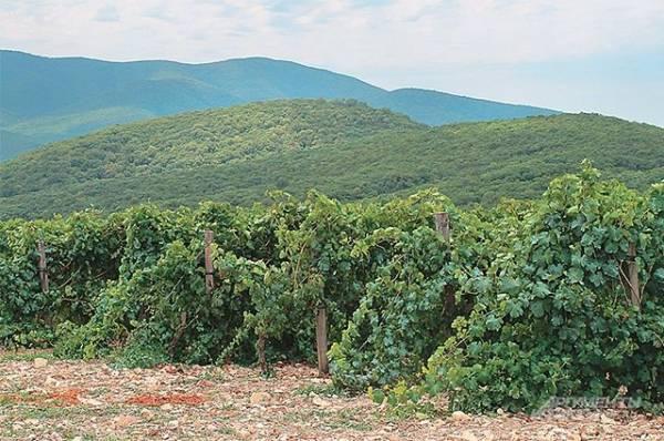 СМИ: мороз уничтожил виноградники в 10 районах Франции
