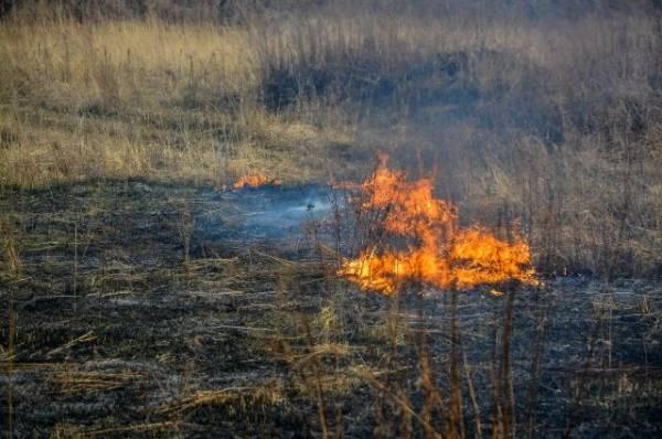 2,8 тыс. палов сухой травы выявили в РФ с начала года