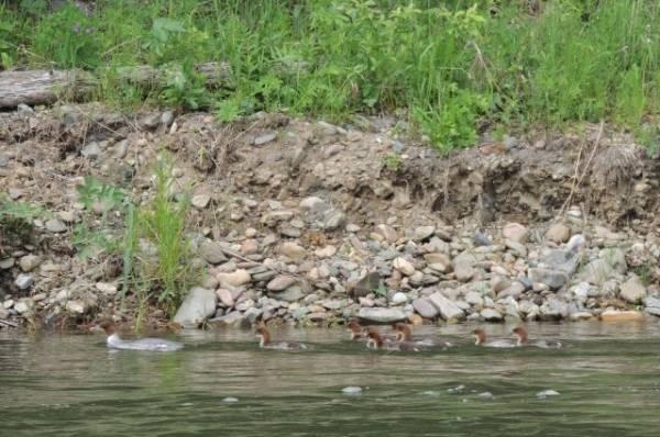 При сплаве по алтайской реке погибла туристка из Новосибирска