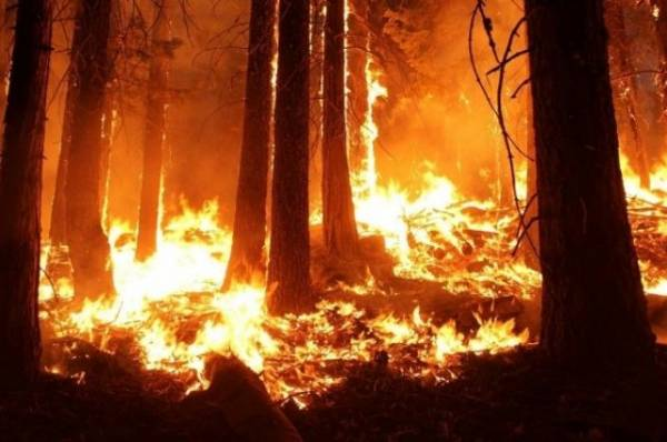 В России за 24 часа потушили 124 лесных пожара